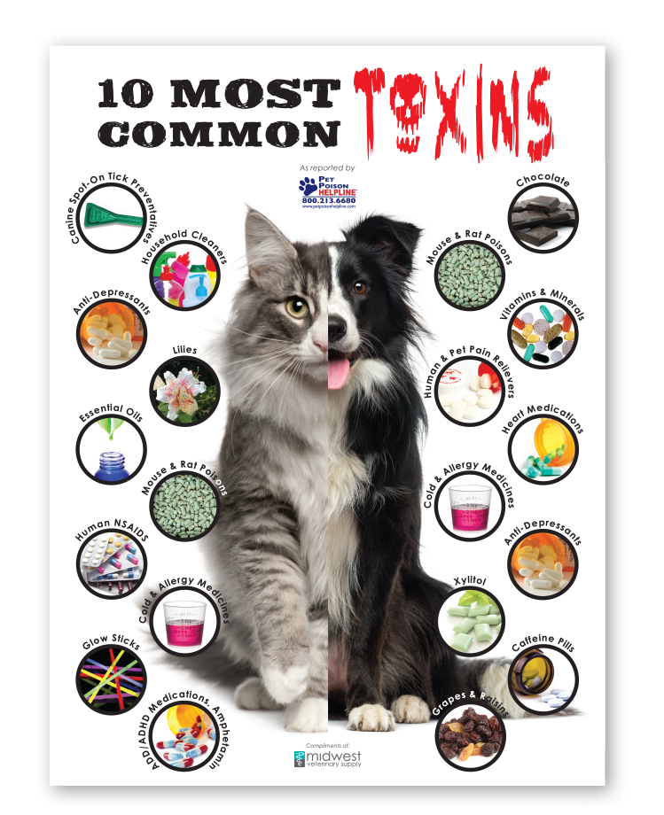 poster showing 10 most common toxins for cats and dogs